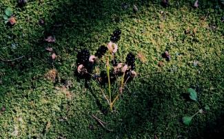"Greens (1)", digital, 2015, part of "Greens"
