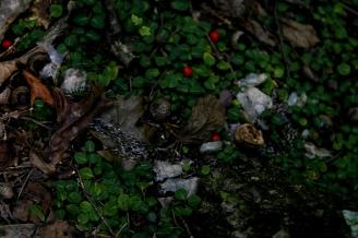 """Ecosystem: The Floor"", digital, 2015, part of ""Ecosystems"""